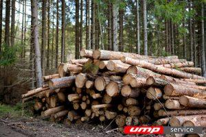 Решения развития лесной промышленности будут обсуждаться на ПМЭФ