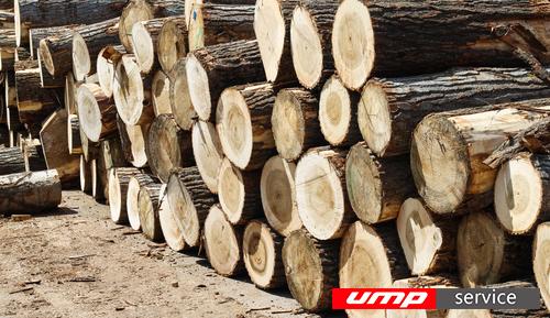 Объем экспорта леса из Кировской области увеличился почти на одну треть